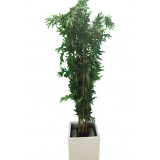 Bamboo Tree in Planter