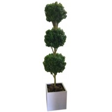 Tall Topiary with White Planter